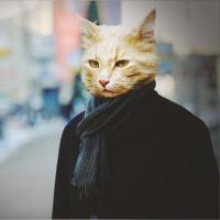 Аватар пользователя Котяра